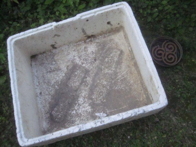 刈り取った雑草を入れる発泡スチロール箱