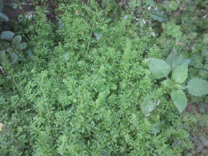雑草が生い茂った場所を上から写真撮影した画像
