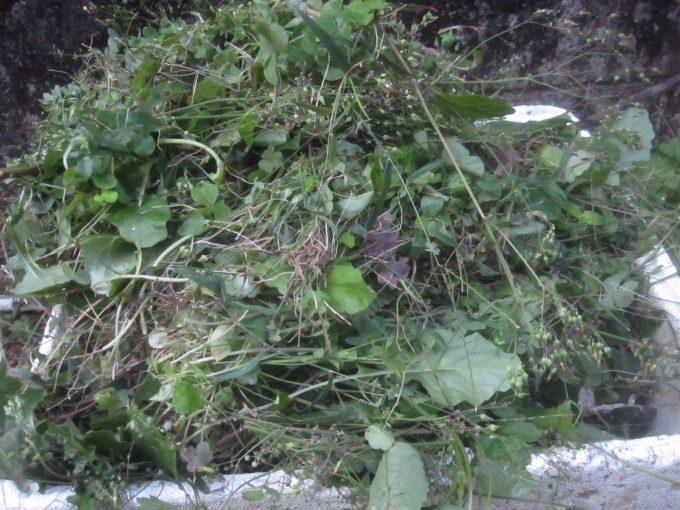 30分以上も草刈り作業を続けて刈り取った雑草の山