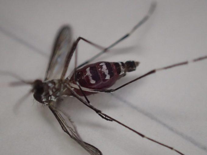 電撃殺虫ラケットは、手で叩き潰す以上に爽快な蚊の駆除方法(笑)