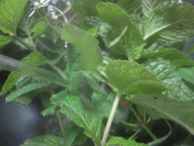 沸かした直後の熱湯をハーブの葉にかける