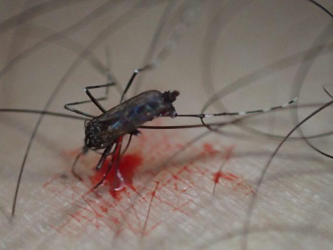 血を吸っていたヤブ蚊を叩いて退治したら赤い血で肌が汚れた