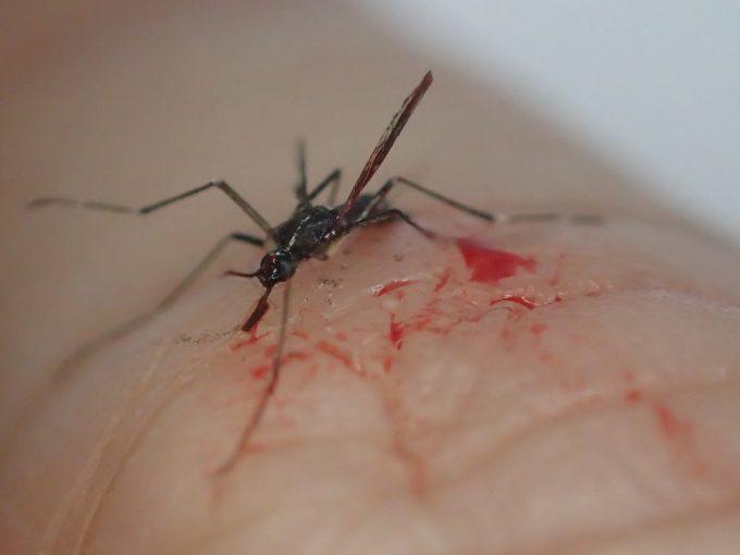 反対の手で叩いて退治したヤブ蚊の死骸