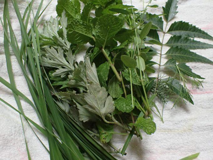 摘み取った香草ハーブ6種類