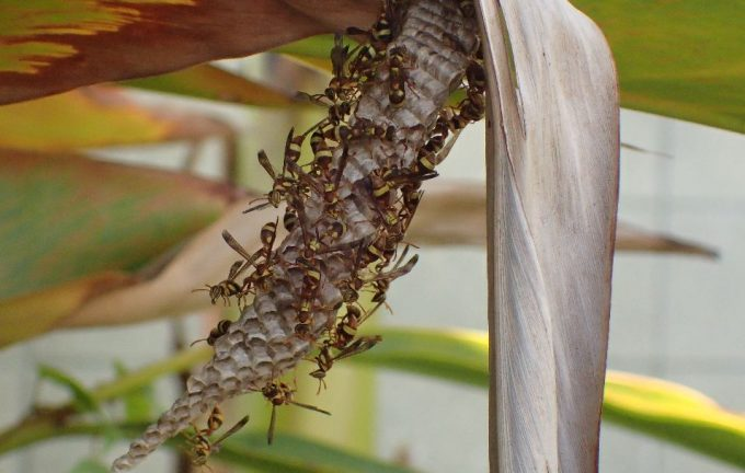 刺された現場に恐る恐る忍び足で近寄ると、蜂の巣を発見!