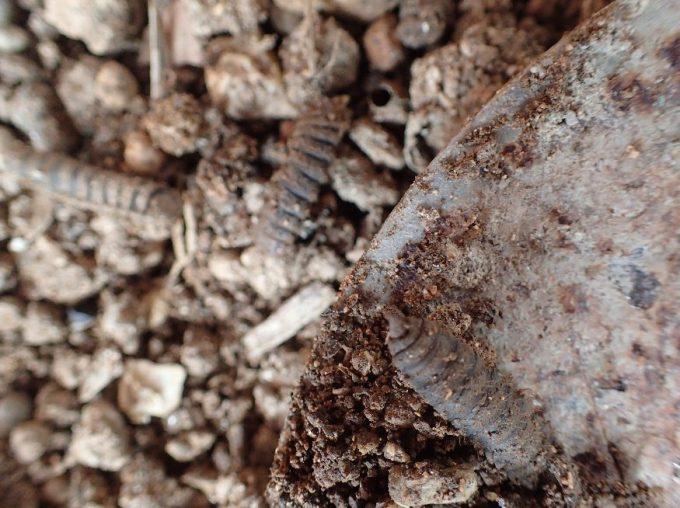 土の上に正体不明の変な物体を発見
