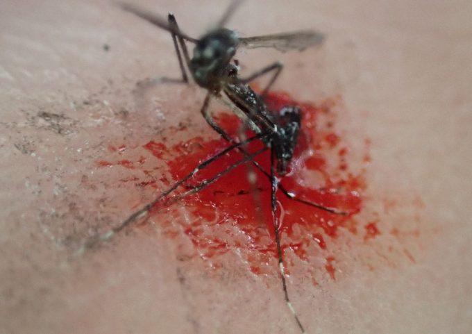 血を吸った害虫ヤブ蚊を叩いて退治・駆除した死骸の写真