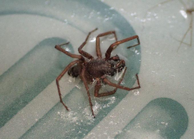 クモ?らしき虫も引っ掛かっていた