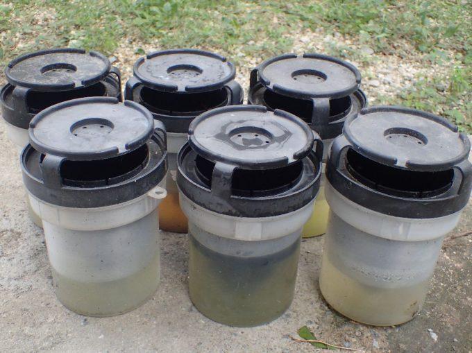 ボウフラ駆除アイテム「蚊とりん」の雨水交換作業