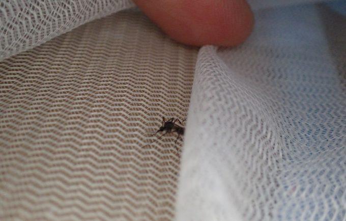 編み目の細かい虫取り網の登場に動揺を隠せないヤブ蚊