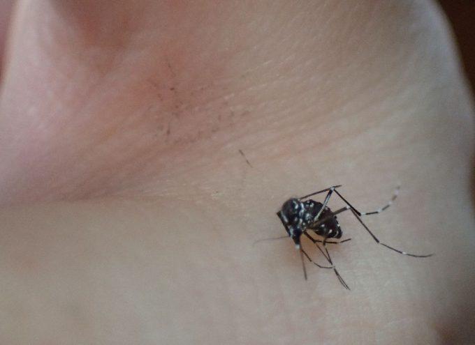 素早く手を握って指で挟んで退治したヤブ蚊の死骸