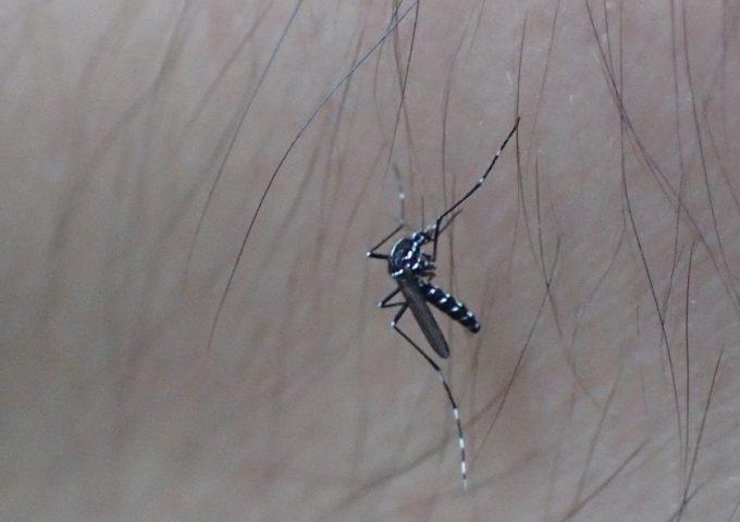 蚊・ボウフラ退治の実験をしていたら、いつの間にか腕を蚊に刺されていた