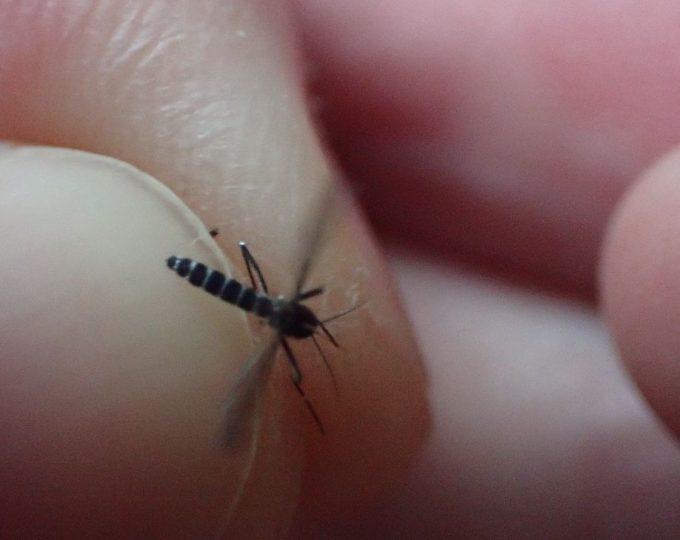 血を吸っていた害虫ヤブ蚊を叩いて駆除した死骸の写真