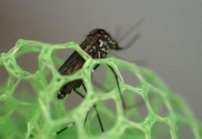 虫取り網の穴から体半分だけ出して暴れるヤブ蚊