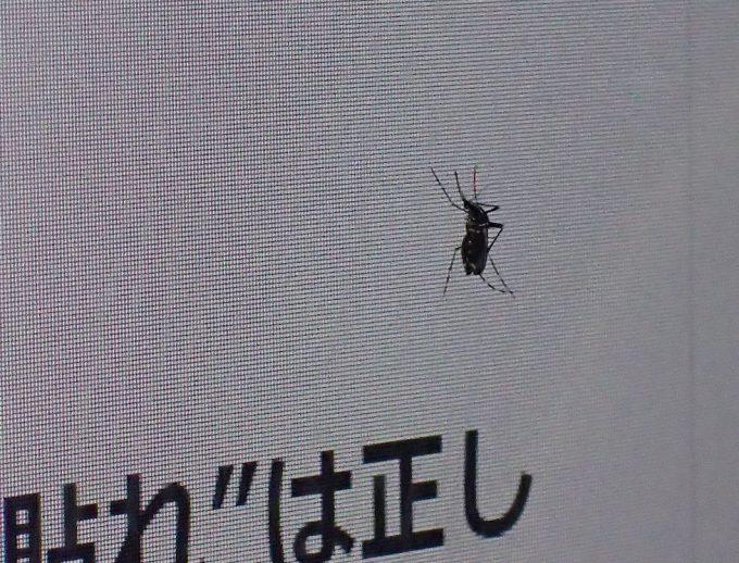 蚊をネタにしたブログを読んで絶句!呆然としているようにも見えるヤブ蚊