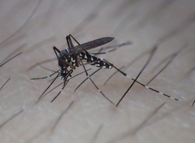 ムダ毛処理された腕は蚊にとって血を吸いやすくなっていた