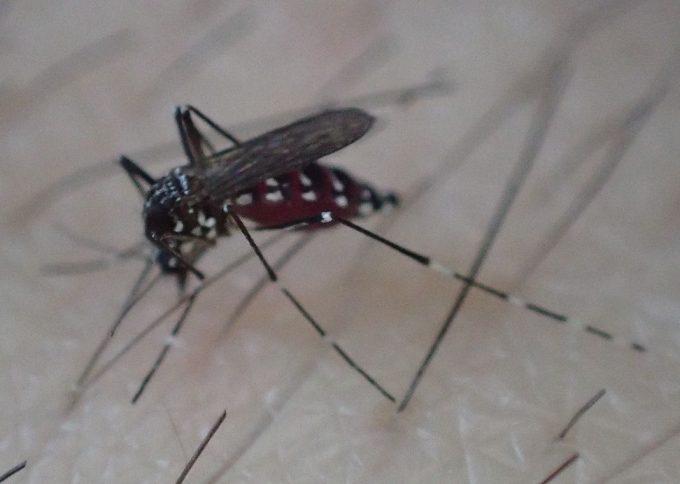除毛、脱毛、剃毛すると蚊に刺されやすくなる証拠画像