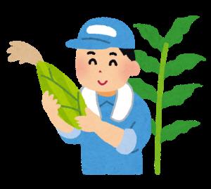 丹精込めてトウモロコシを育てる農家さん