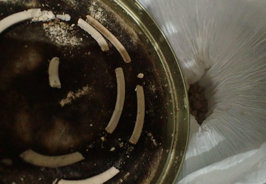 袋の中へ蚊取り線香の燃えカス灰を溜める