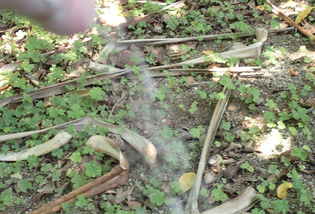 蚊を狙って蚊取り線香の灰を投げつける瞬間