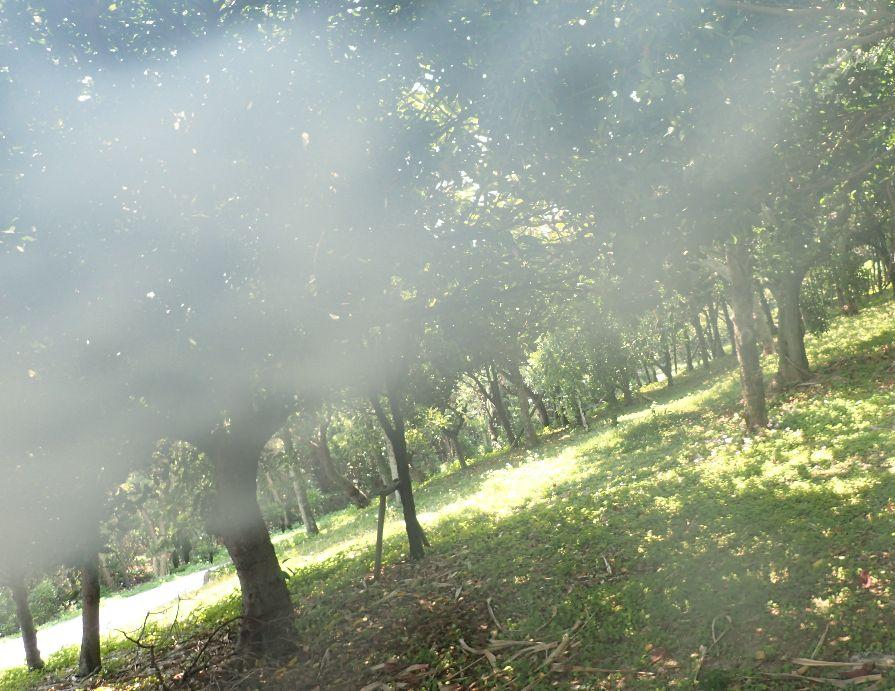 野山で寄ってくる蚊をタバコの煙で追い払う実験中