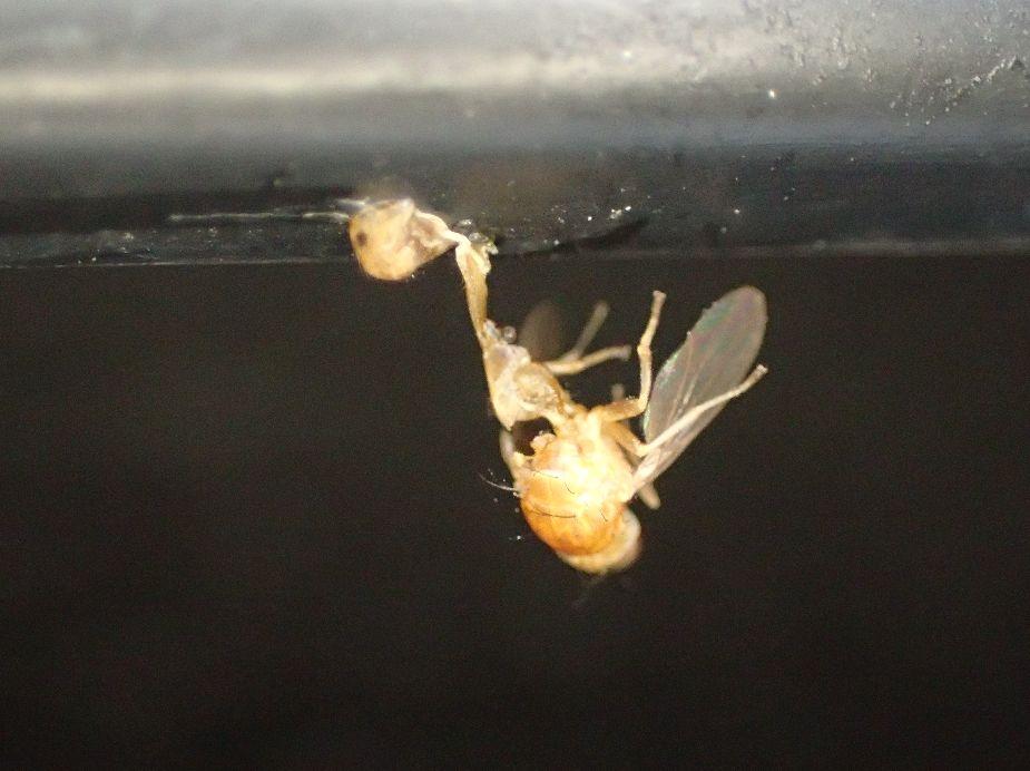 クモの巣の罠にかかって捕食された虫たちの死骸