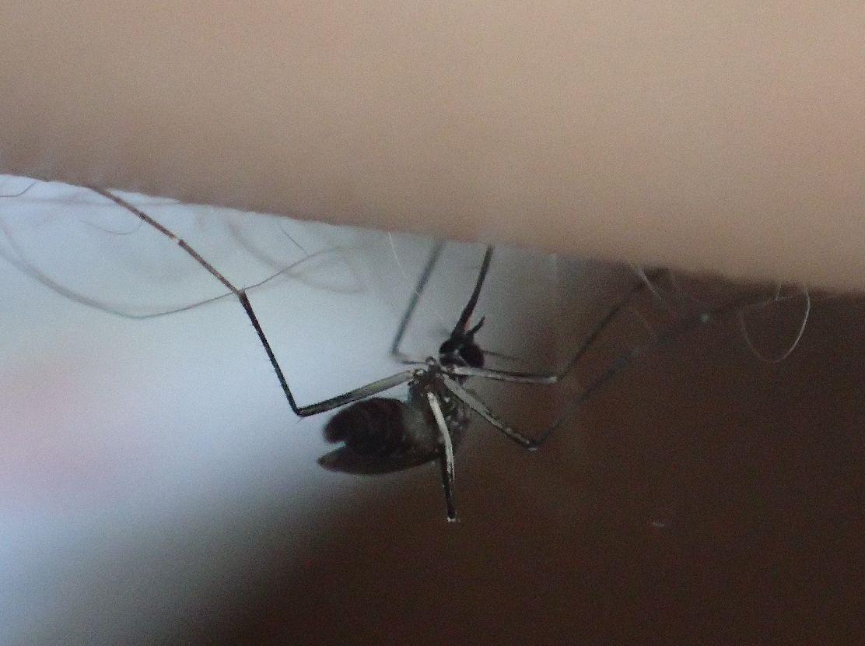 二の腕から血を吸うヤブ蚊(ヒトスジシマカ)