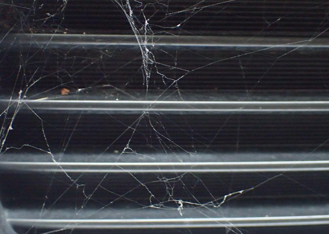 自動車の前方パンパーに張られたクモの巣