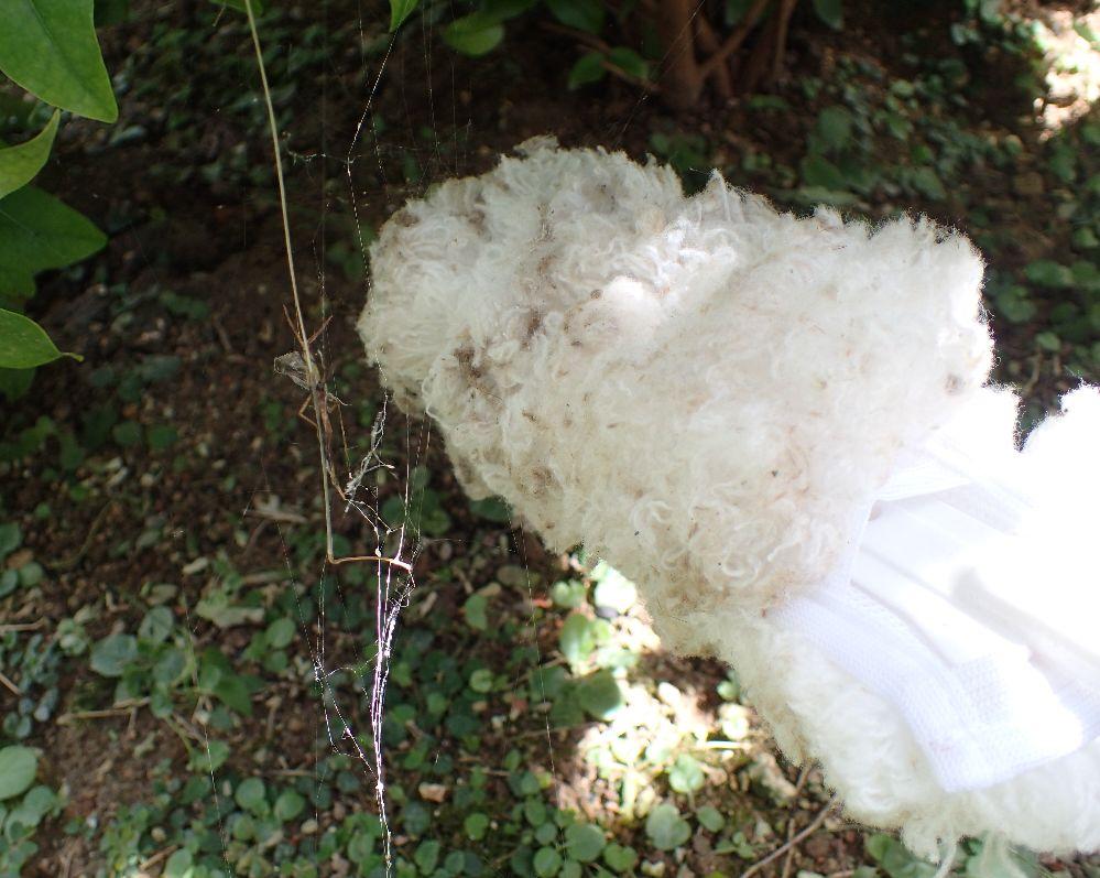 家の外で人目につく場所に張られたクモの巣を除去する様子