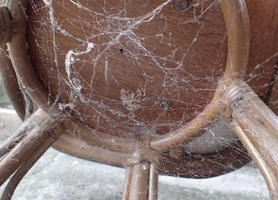 椅子の下のユウレイグモが張ったクモの巣