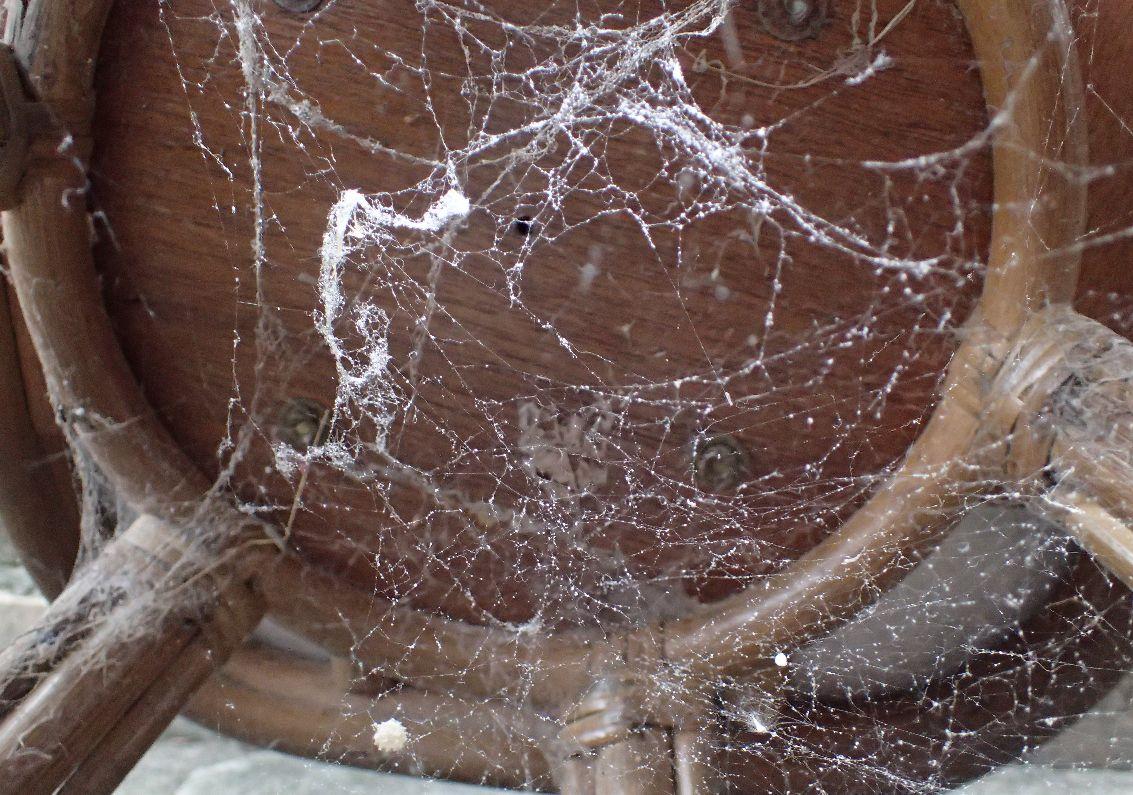 クモの巣に重曹をふりかける