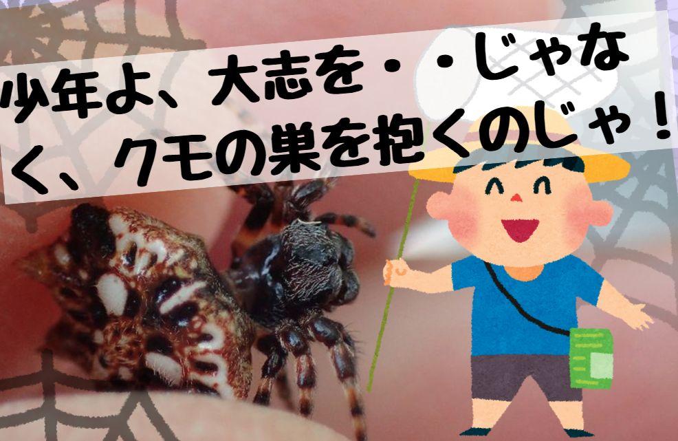 トゲグモ「少年よ大志じゃなく、クモの巣を抱くのじゃ!」
