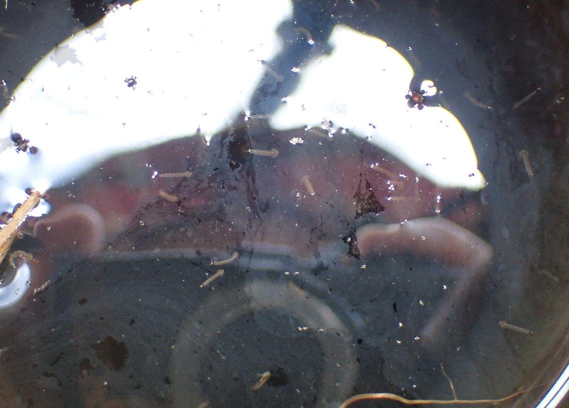 遊具のくぼみ、隙間に溜まった雨水の中で大量発生したボウフラ