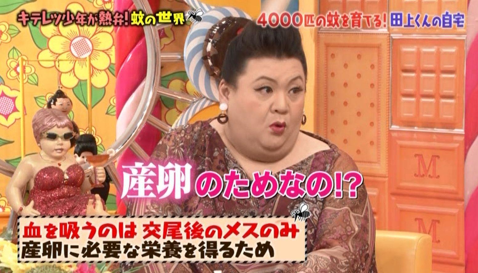 マツコの知らない蚊の世界 ゲスト:田上大喜さん