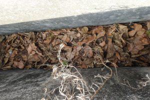 フタのない塞がれていない側溝に溜まった落ち葉、枯れ葉