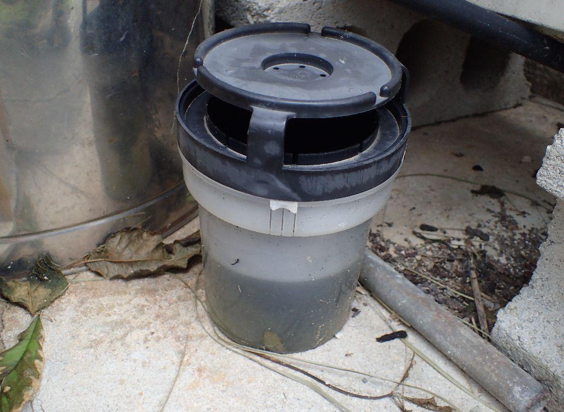 雨水の貯まる場所をなくし、蚊とりんを置いて対処した