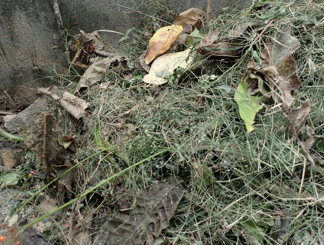 台風で一ヶ所に集まった枯れ木や落ち葉